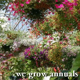We grow annuals