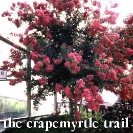 Crapemyrtle trail